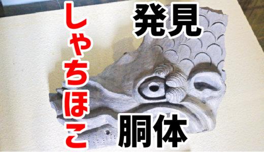 犬山城のしゃちほこ胴体が発見されました。3年ぶり